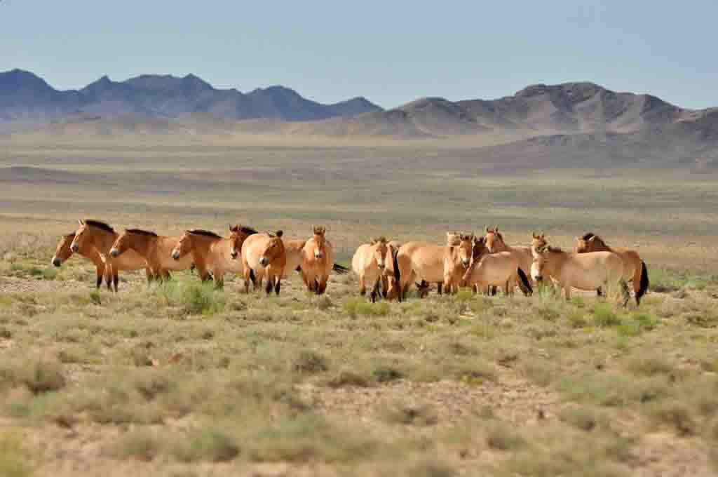 Центральная Азия на фоне пандемии создает единую карту заболеваний животных