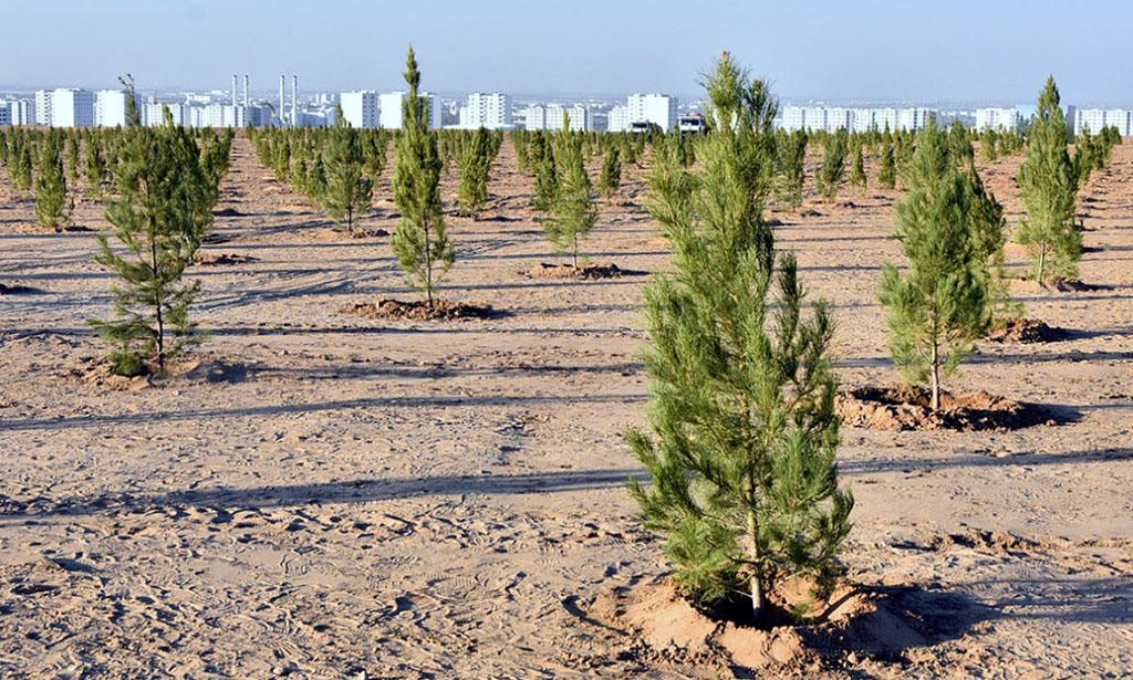 Разработан проект Национальной лесной программы Туркменистана на 2021-2025 годы
