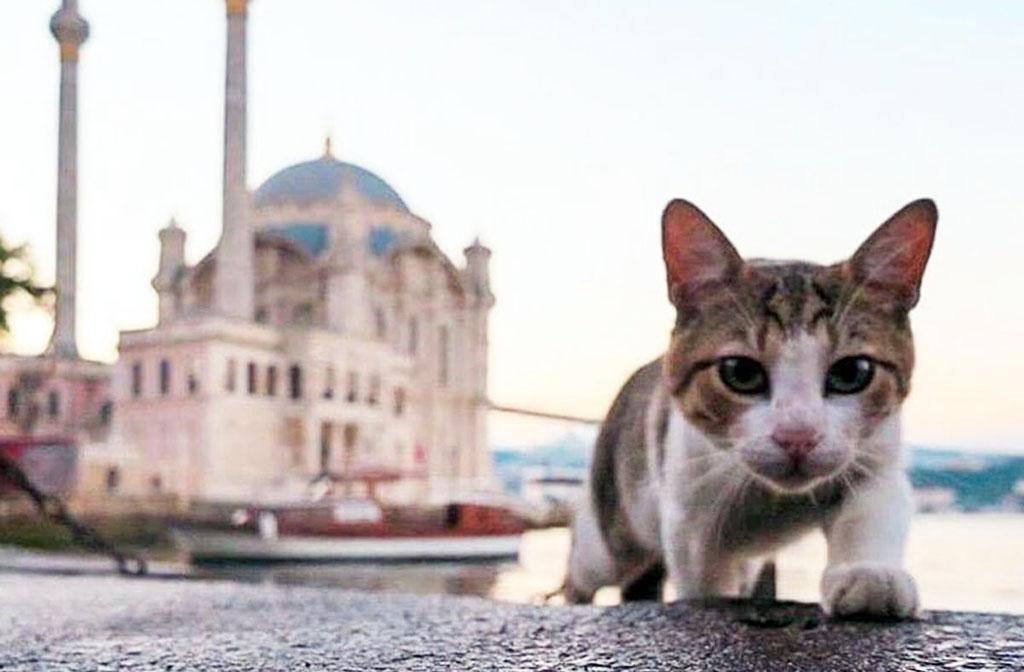 Животные в Турции стали еще больше защищены законом