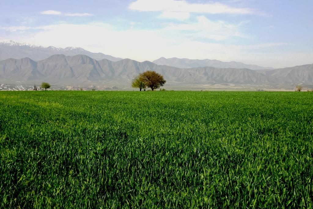 Форум по экологии Каспия и туркменский АПК в свете 7-месячных итогов