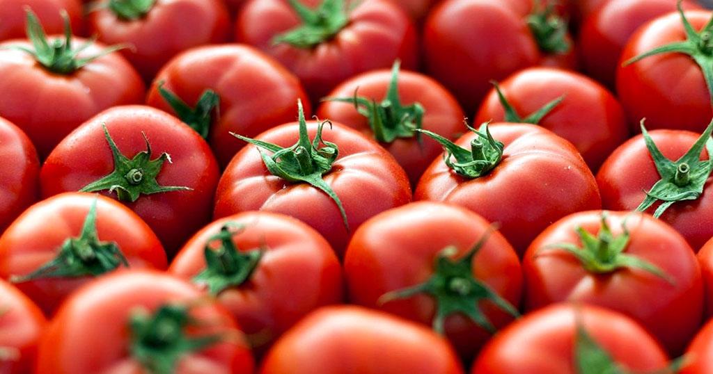 Предприниматели Туркменистана ежегодно удваивают экспорт томатов