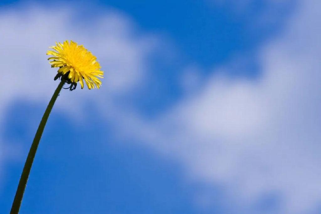 7 сентября - Международный день чистого воздуха: почему это важно