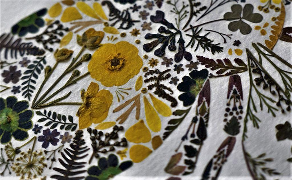 Ботаника как искусство, или Куда приводит хобби и что такое ошибана