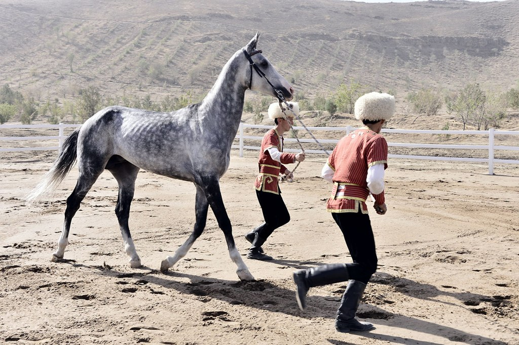 В Ахале заложили фундамент новой современной конюшни