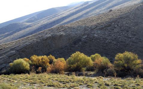 В последнюю неделю июля жара в Туркменистане смягчится